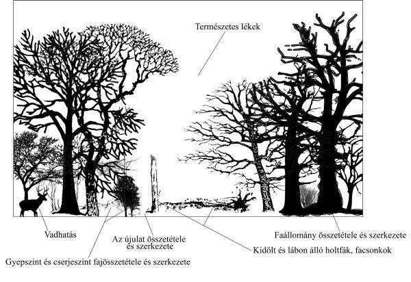 Erdő természetességére utaló jelek Illusztráció: Bakó Gábor, Pócs 1981. ábrája alapján