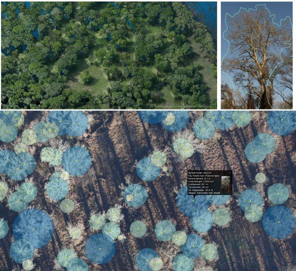 Az erdők funkcionális állapotát időről-időre ellenőrizni kell, a térben és időben változó paraméterek terepi és légi felmérésből ismerhetők meg. Fotó: Bakó Gábor 2017.