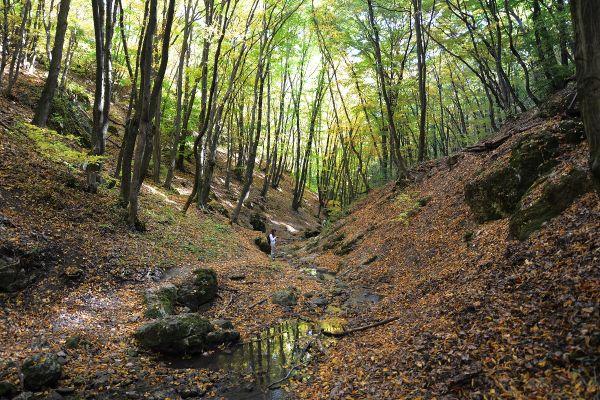 Erdeink a faanyag megtermelésén túl nem csak rekreációs szolgáltatást nyújtanak Fotó: Bakó Gábor