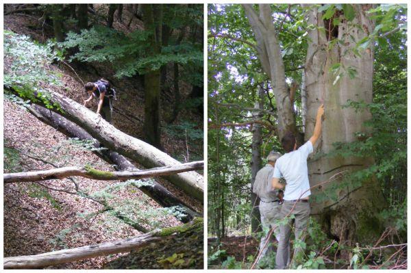 Az erdők állapotát időről időre monitorozzák a kutatók Fotó: Szőke Viktória/ Magyar Természettudományi Múzeum