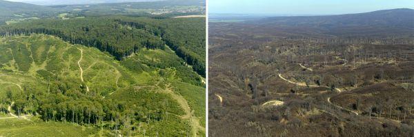 """Példák bakonyi erdőterületekre. Az """"erdőterület"""" meghatározás a letermelt, éppen csak telepített és ültetvényi területeket is magában foglalja, még akkor is, ha ezek nem látják el azt az ökológiai funkciót, amit erdő alatt értünk. A felvételeken látható gazdálkodási módok az előző évszázadokban működőképesek voltak, de a megváltozó klímaviszonyok mellett a kedvező fajösszetételű erdő nehezen vagy egyáltalán nem képes megújulni.Súlyosbítja a helyzetet, hogy az emberiség nyersanyag igénye is kielégíthetetlen mértéket ölt. Felvételek: Civertan Stúdió / Jászai Balázs"""