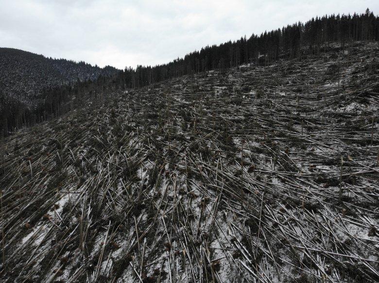 A gyergyószárhegyi közbirtokosság egyik letarolt területe. A szélvihar alapos pusztítást végzett • Fotó: Gyergyószentmiklósi Erdőrendészeti Hivatal