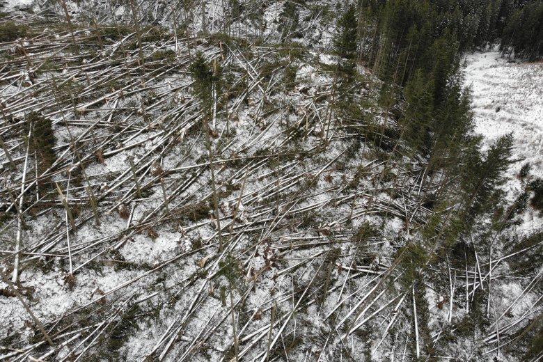 Fotó: Gyergyószentmiklósi Erdőrendészeti Hivatal