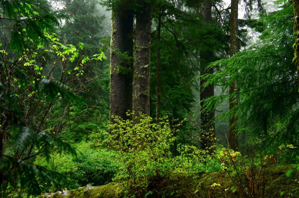 Spotted Owl and Marbled Murrelet Habitat