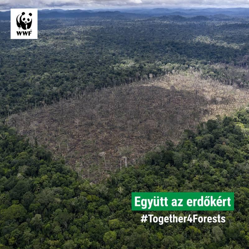 Together4Forests_WWF_02