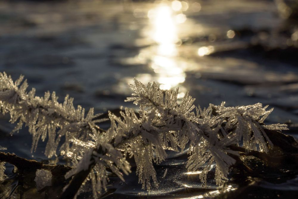 Salgótarján, 2020. november 22. Deres növények egy befagyott pocsolyában Salgótarján közelében 2020. november 22-én. A térségben hajnalban több helyen mínusz 9 Celsius-fok körüli hideget mértek. MTI/Komka Péter