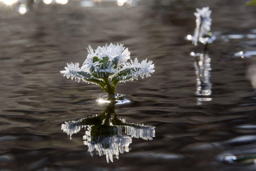 Salgótarján, 2020. november 22. Növényekre fagyott jég a Sátormegi-patakban Salgótarján közelében 2020. november 22-én. A térségben hajnalban több helyen mínusz 9 Celsius-fok körüli hideget mértek. MTI/Komka Péter
