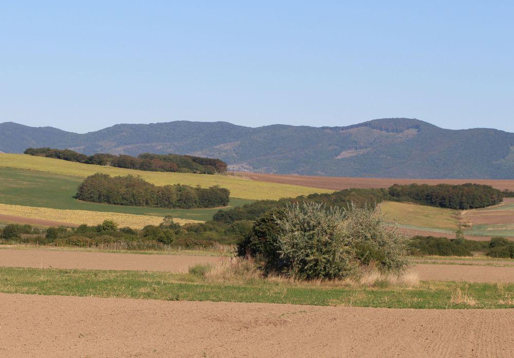A fogolynak kedvező élőhely-foltokkal, sávokkal tarkított agrártáj a Nógrád megyei Kozárdon (Fotó: Gribek Dániel)