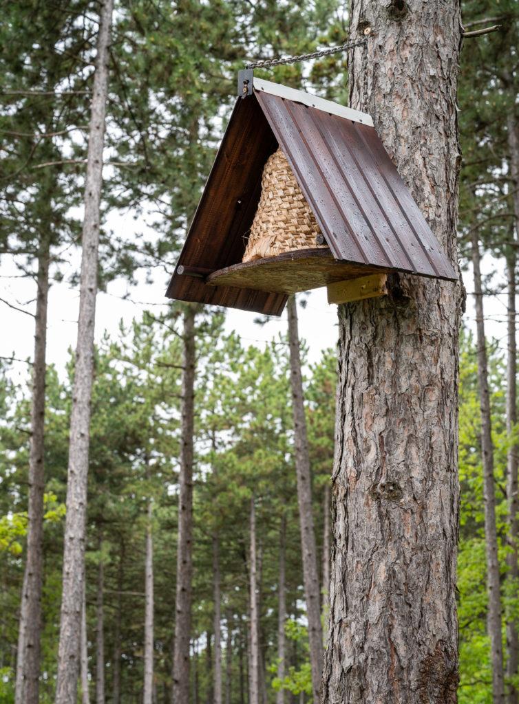 Méhkaptár (Fotó: Pilisi Parkerdő Zrt.)