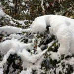 Több mint tíz centiméternyi hó hullott a Bükkben