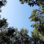 kmnpi-erdő